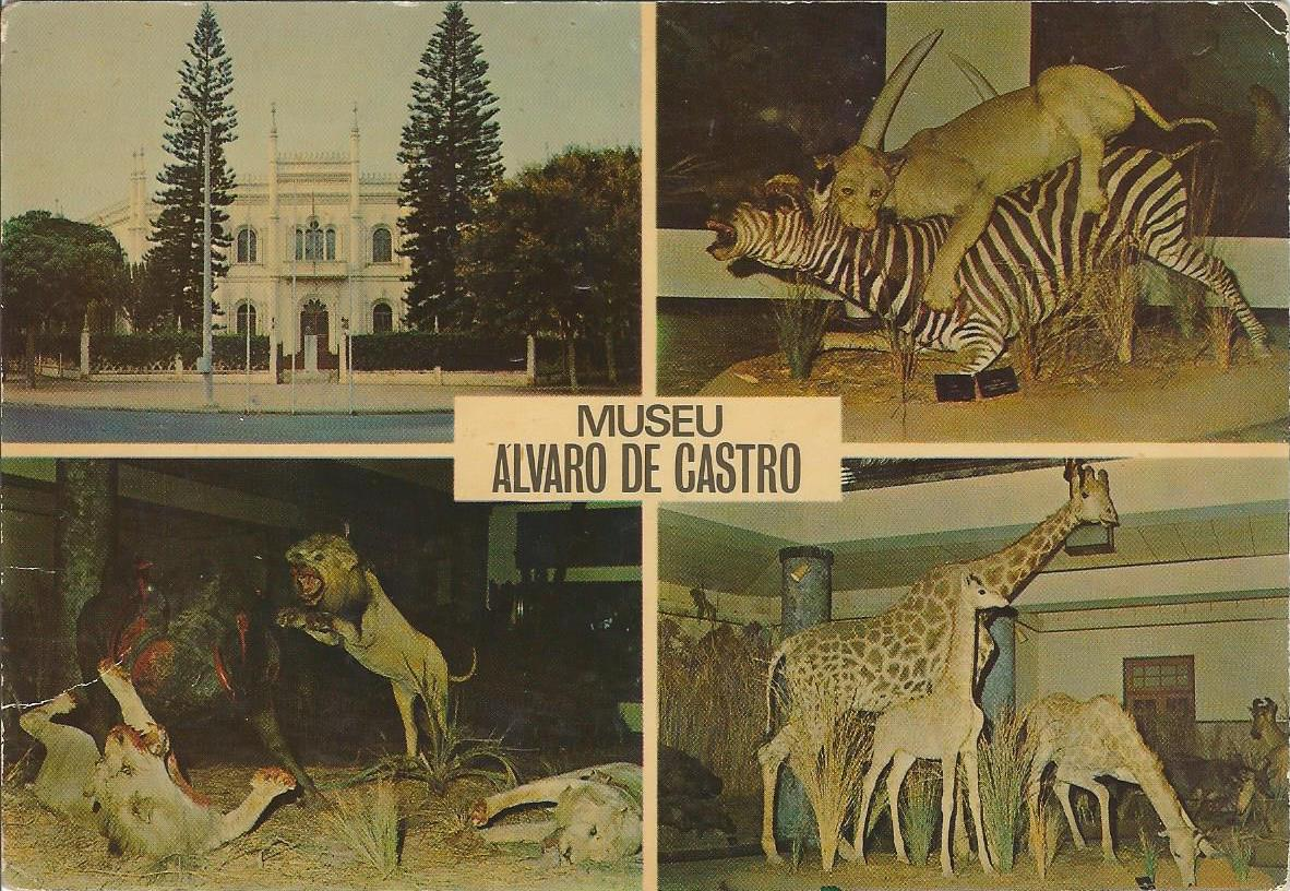 Postcard of Museo Álvaro de Castro in Lourenço Marques, Mozambique